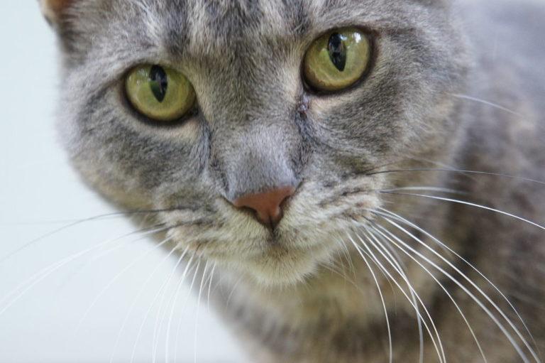 Why catcalling sucks