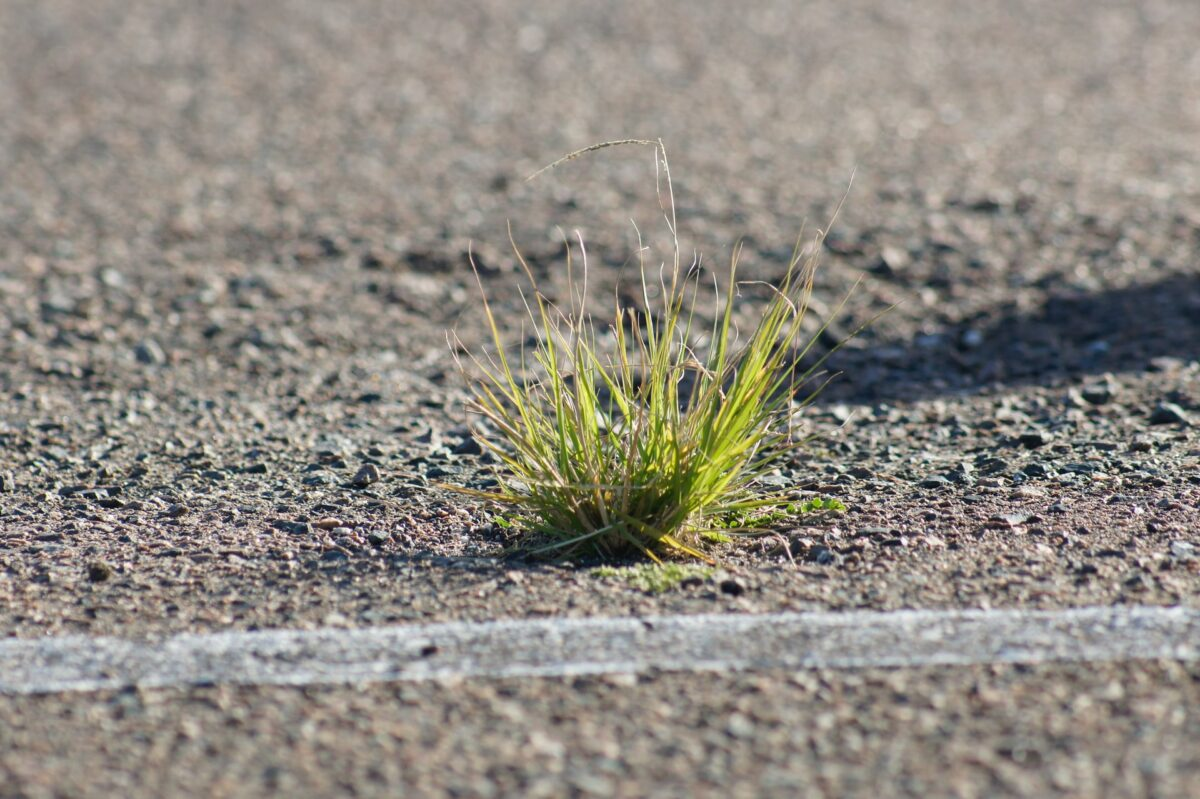 image of grass sprouting from concrete